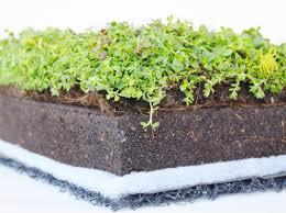 Cubiertas vegetales, sedum, cubiertas ajardinadas, cubiertas verdes