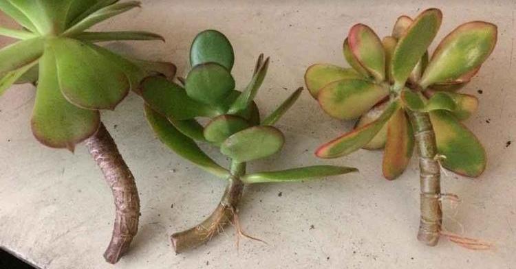 Reproducción vegetativa o asexual